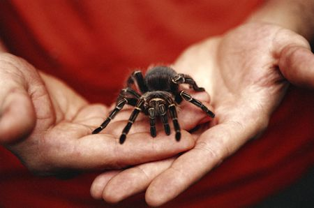 insects and spiders pets guide for beginners