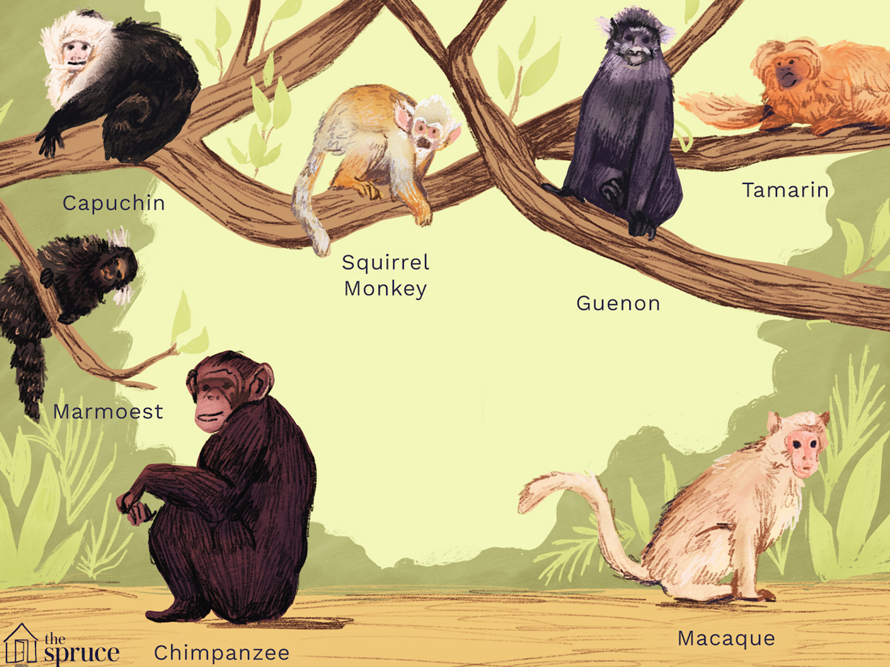 7 Kinds of Primates That Can Be Kept as Pets