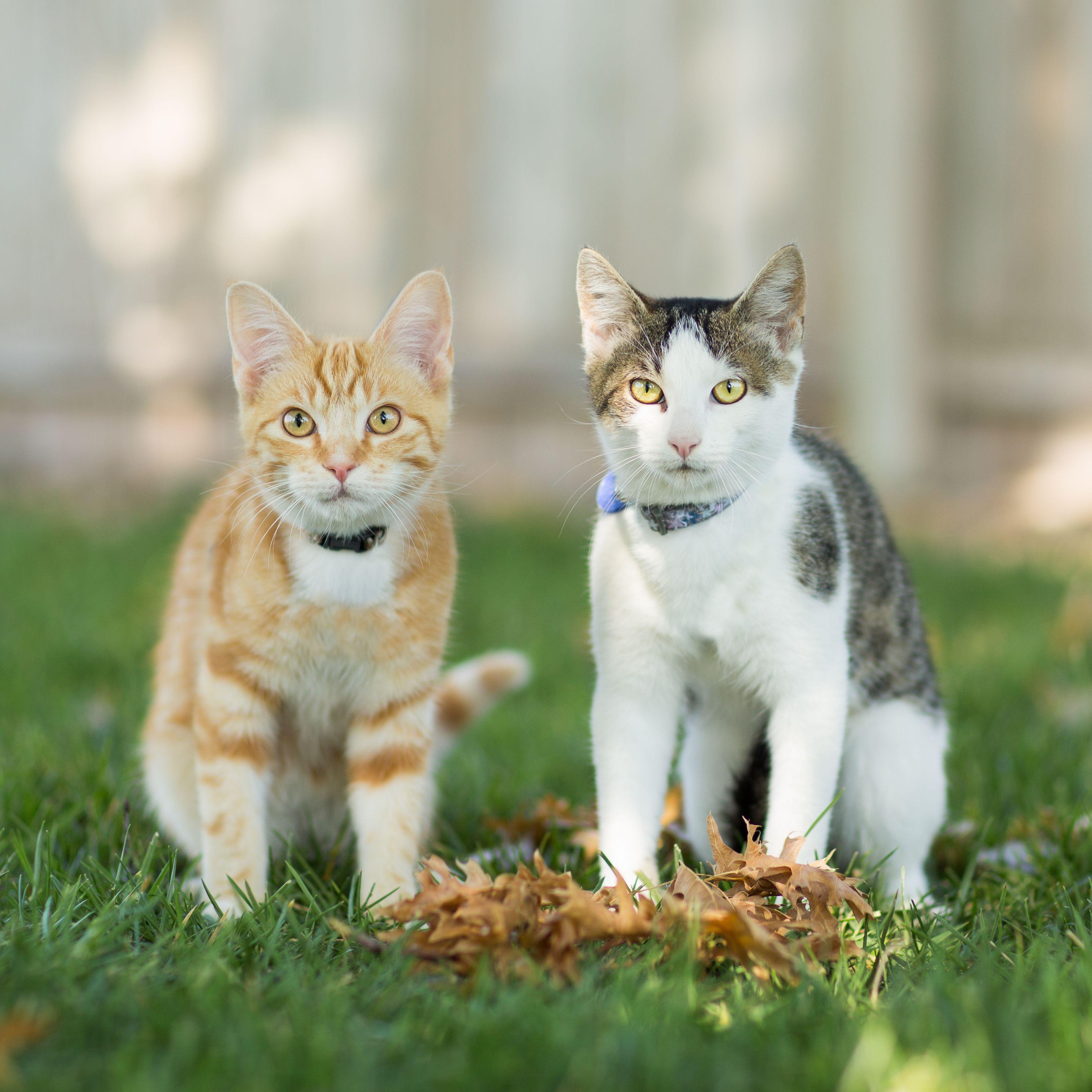 anti worm medication cats