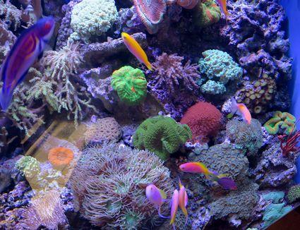 Saltwater reef habitat