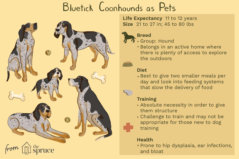 bluetick coonhounds as pets