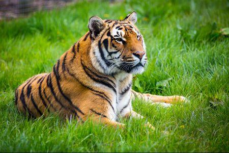 Rapper Tyga Relinquishes Pet Tiger