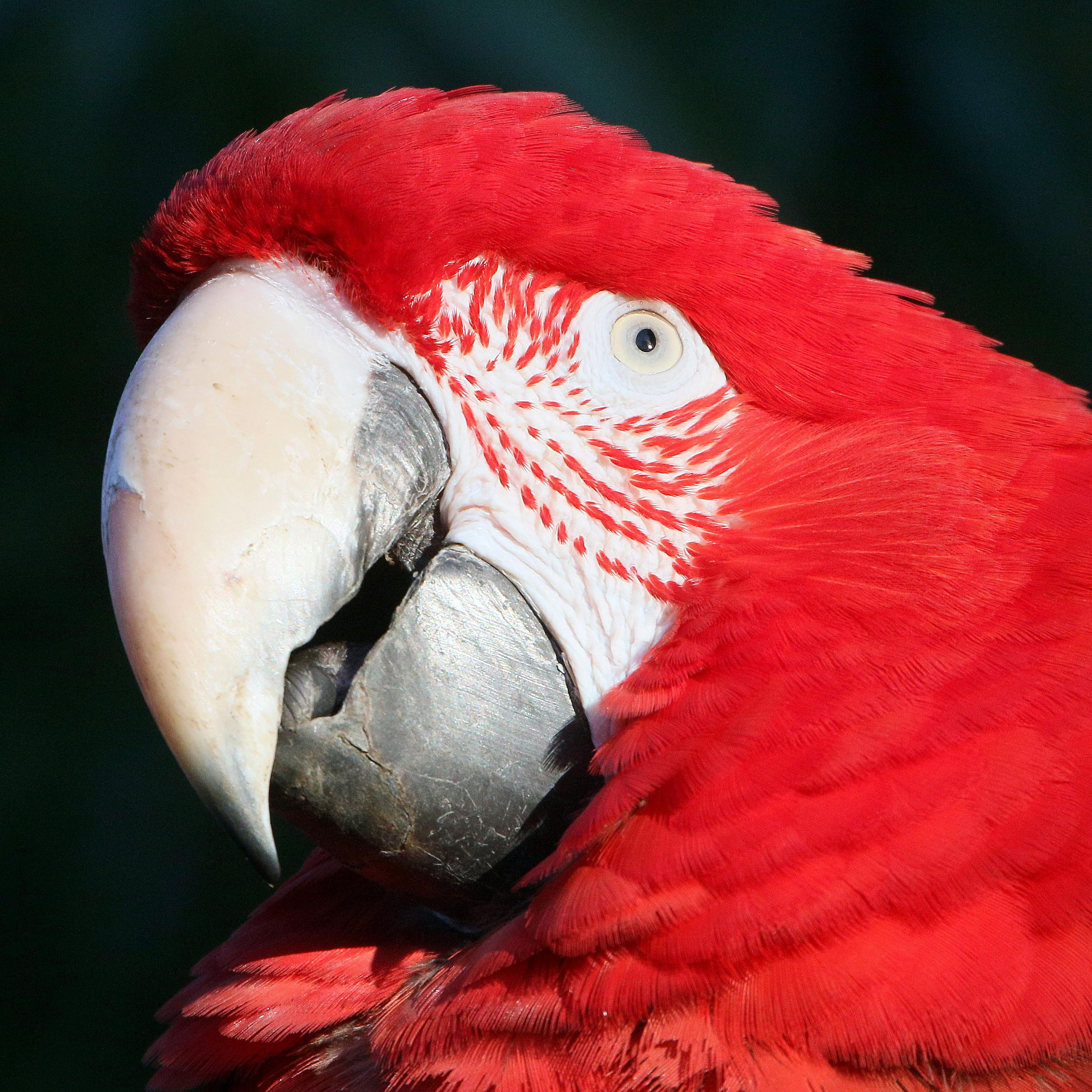 What Is Parrot Eye Pinning?