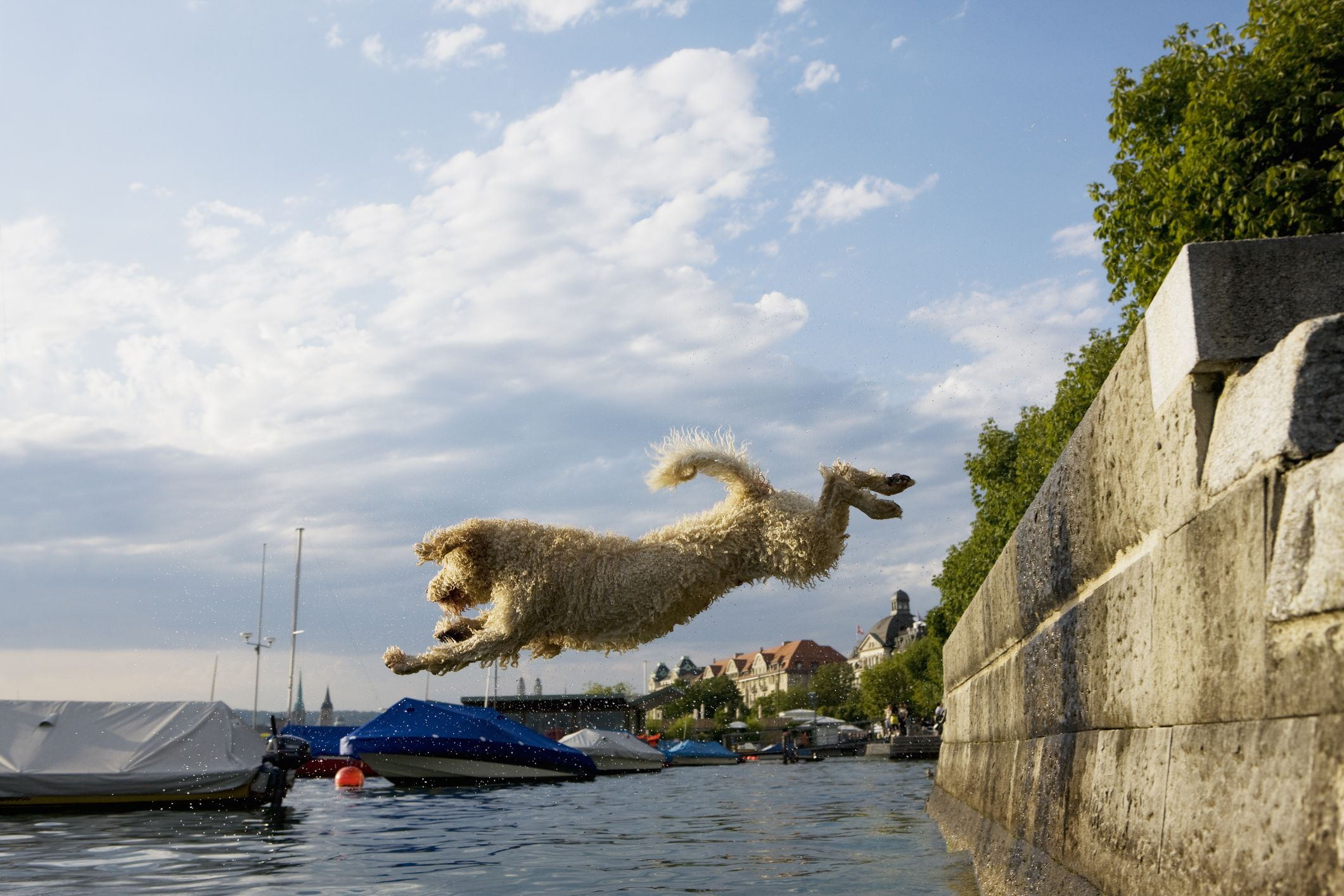 10 Dog Breeds That Love the Water