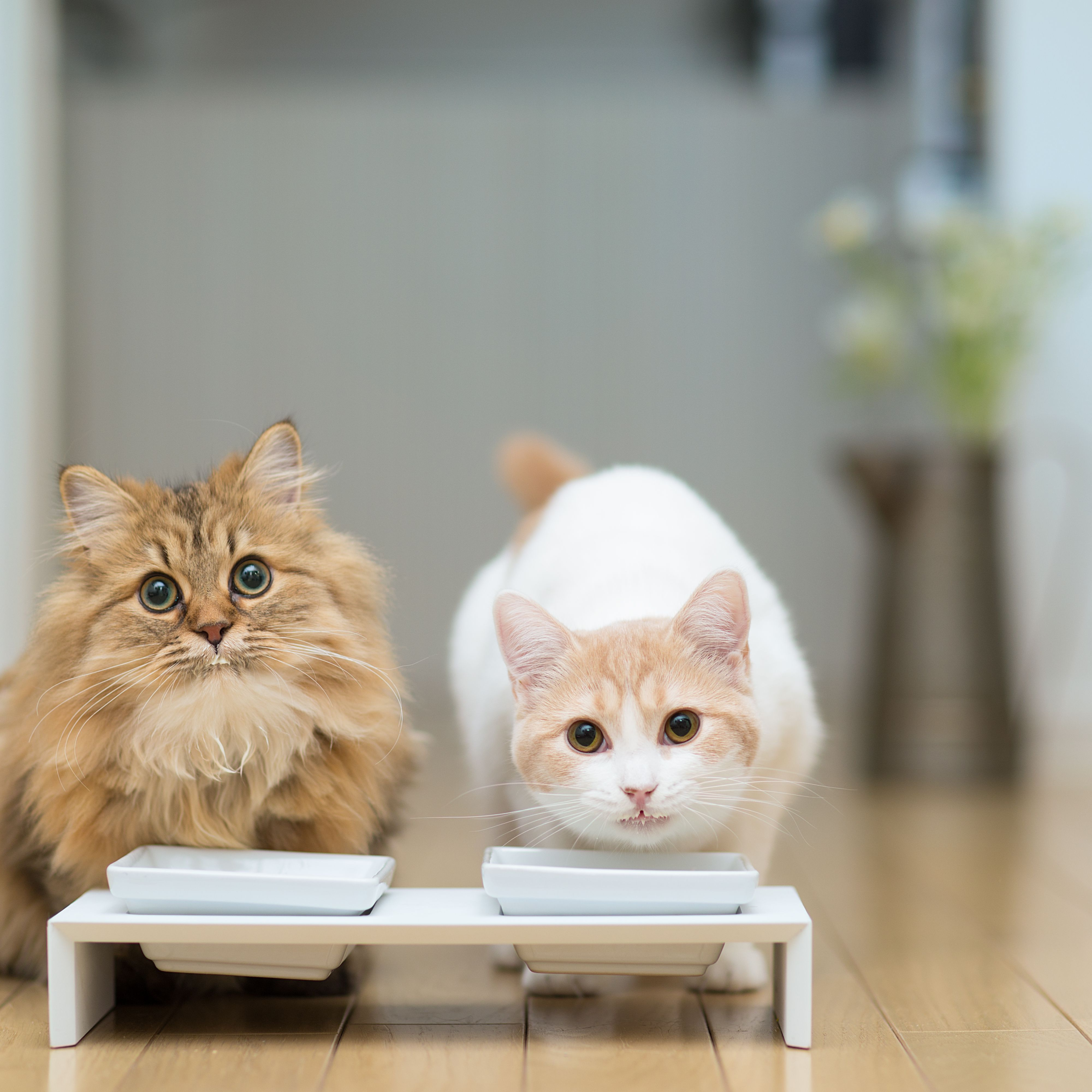 Is Feeding Milk To Your Cats Healthy For Them