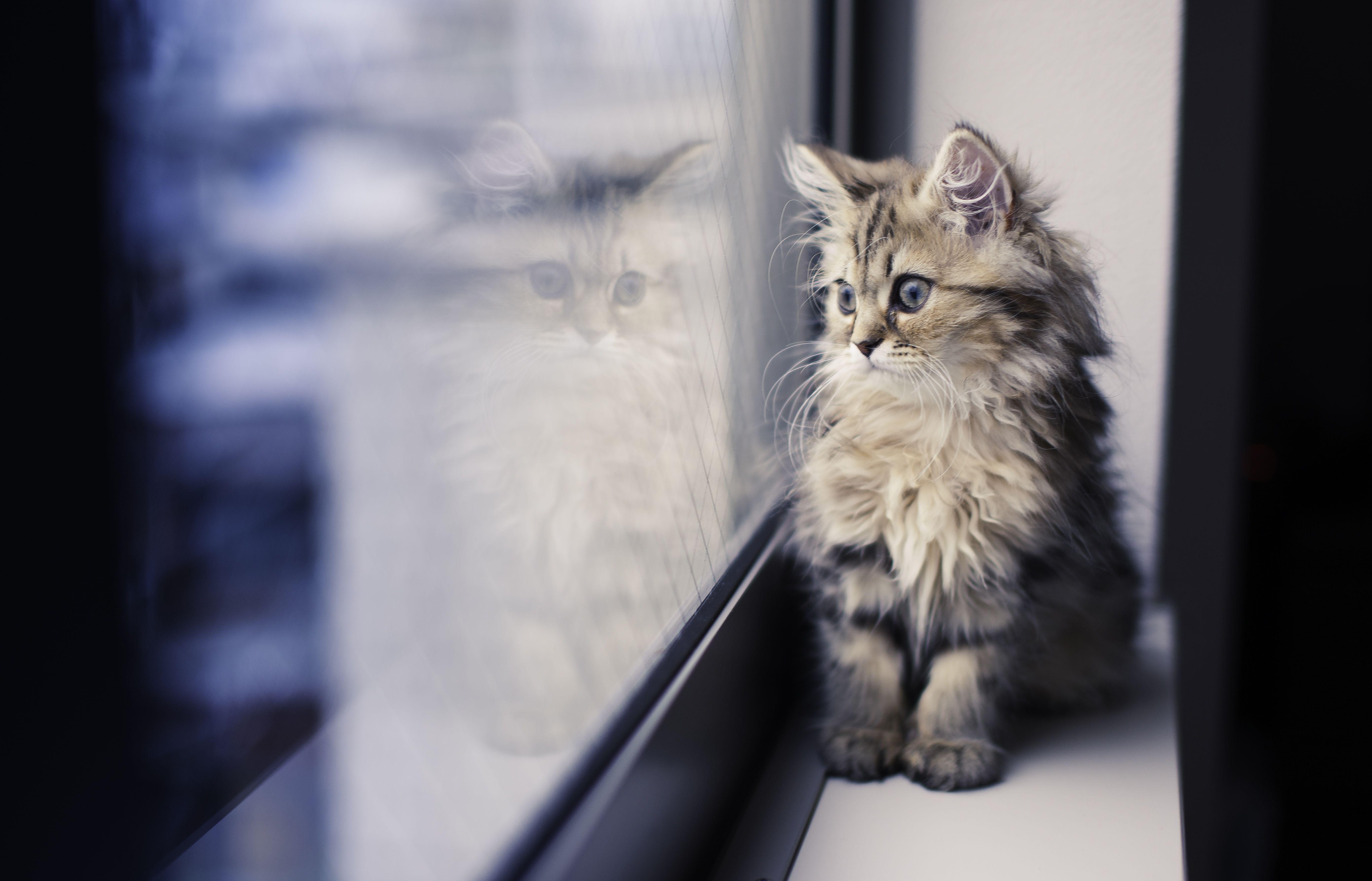 kittens parasites