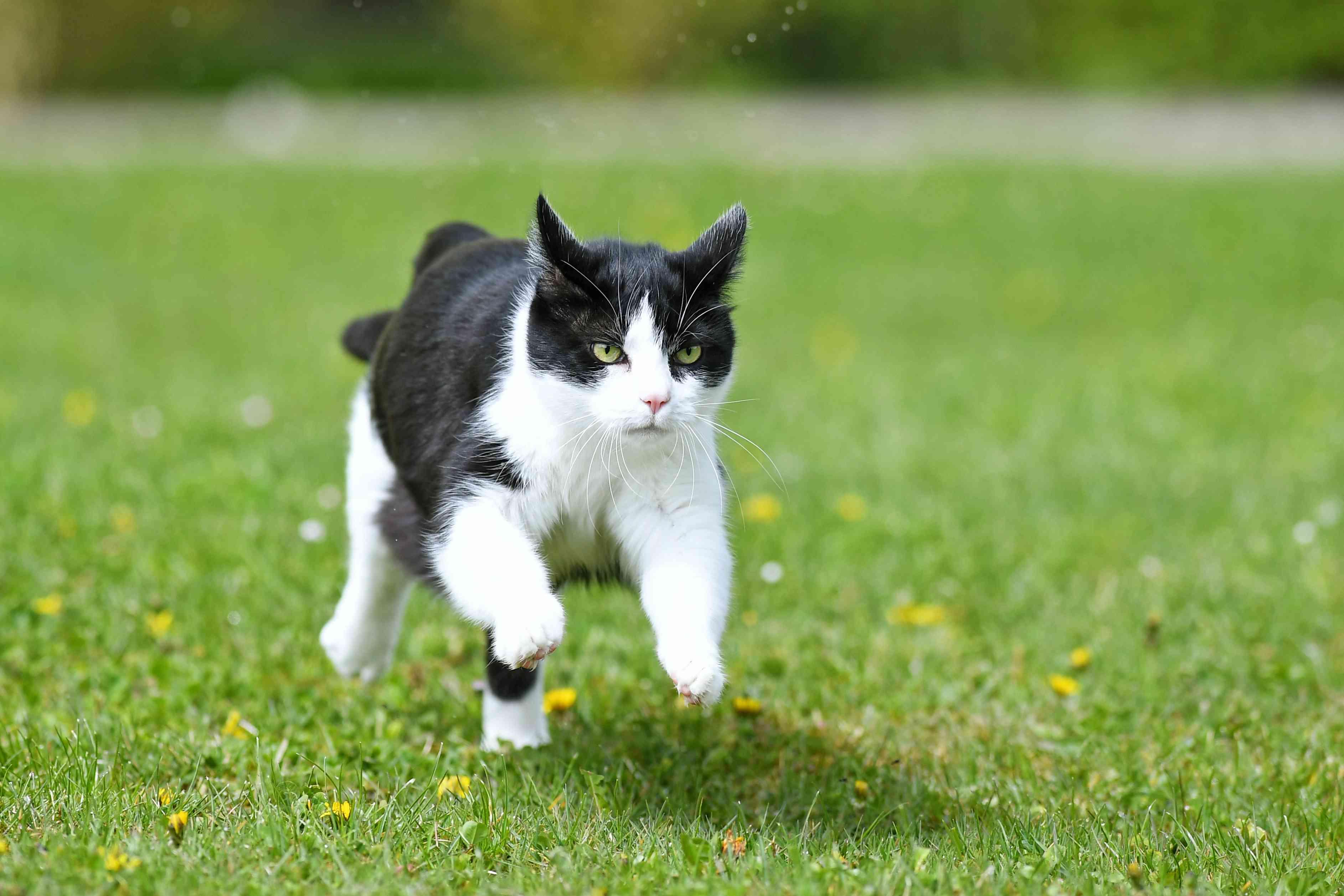 15 Unique Male Cat Names