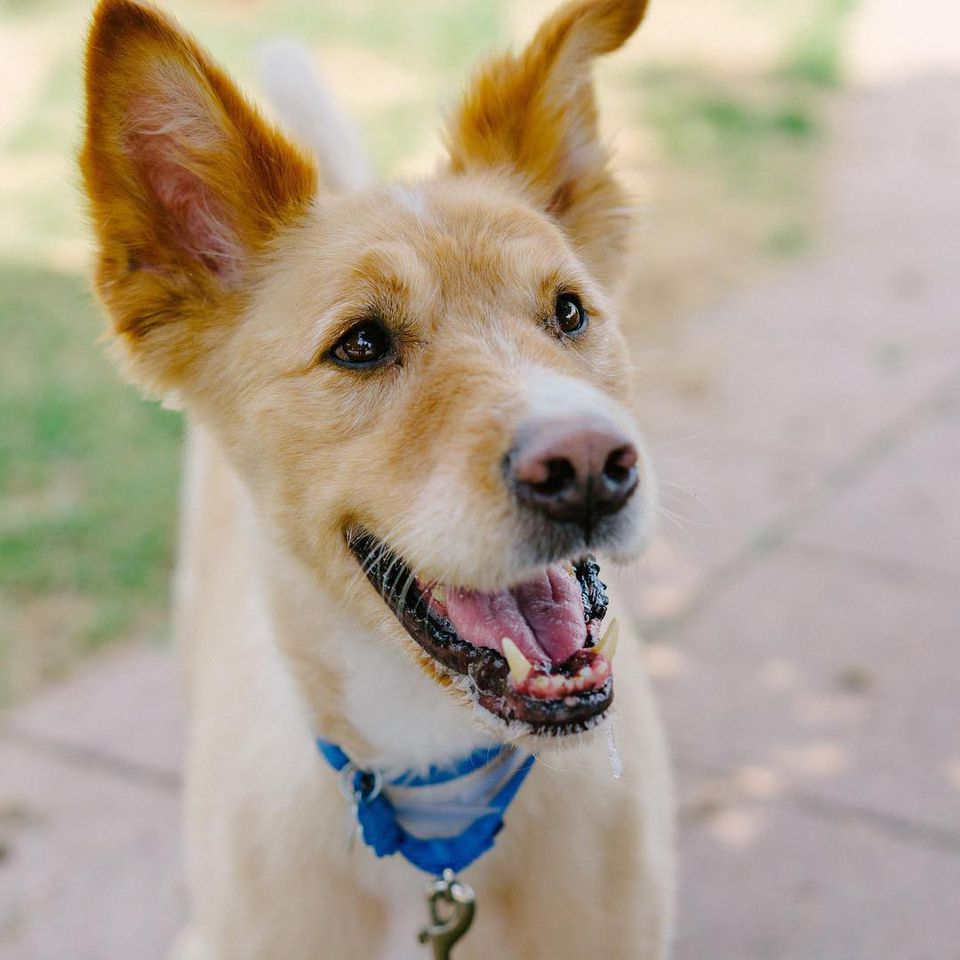 Cute Photos Of Mixed Breed Dogs