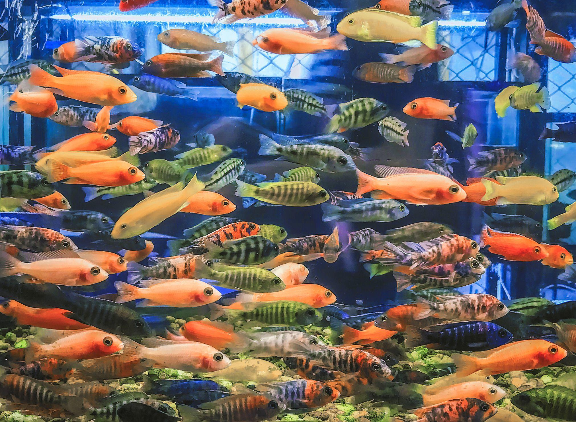 Aquariums - cover