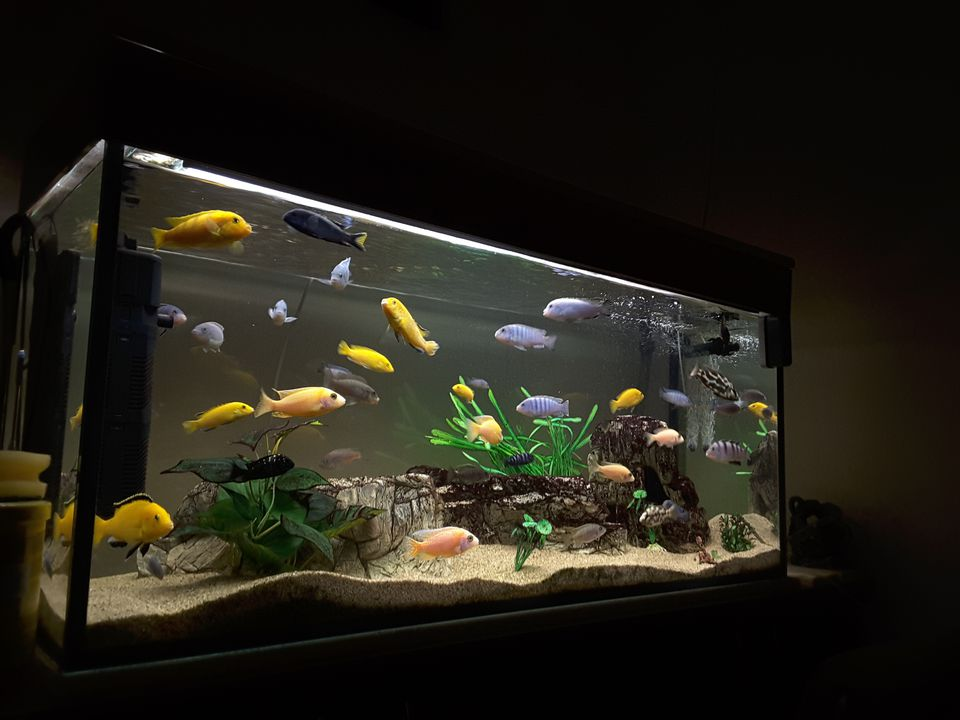 About 20 different fish swimming in an aquarium.