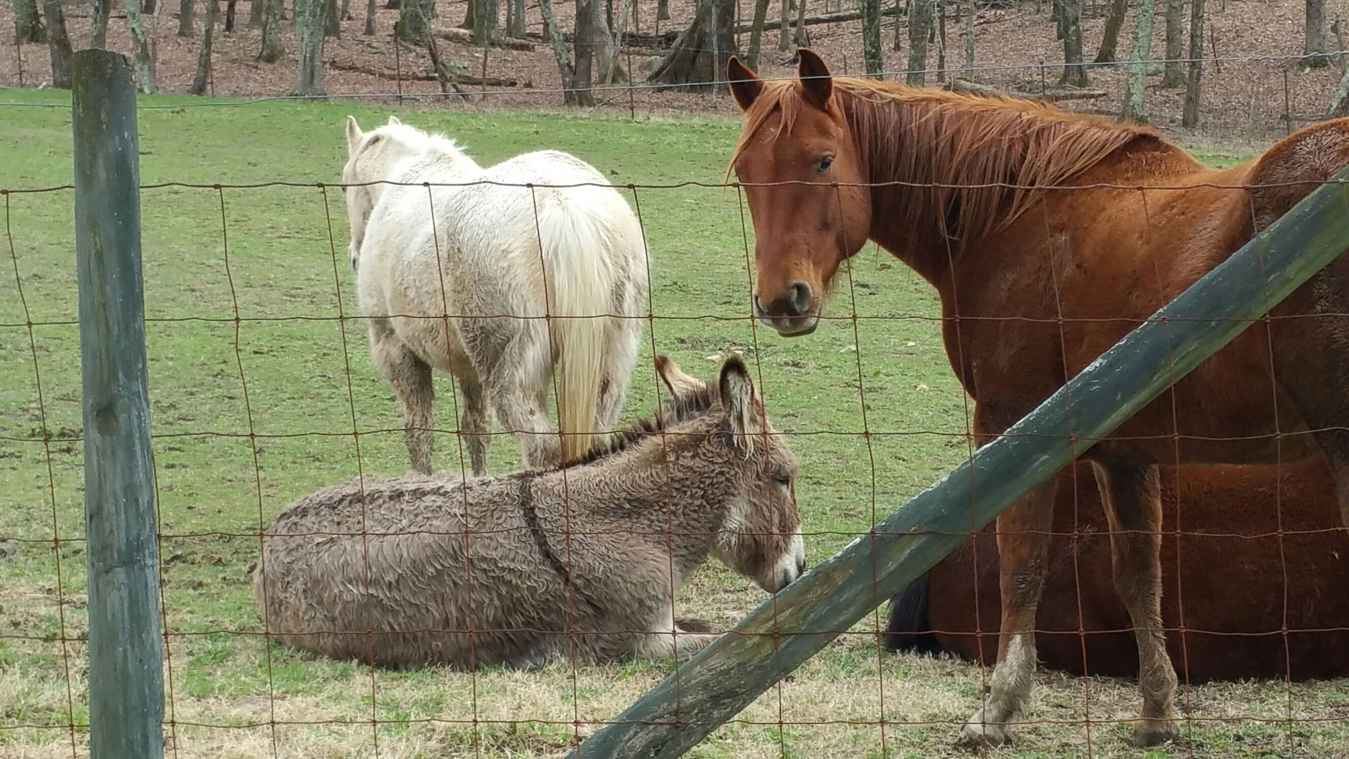 Horses And Donkey On Grassy Field Seen Through Fence