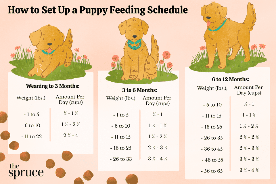 How to Set Up a Puppy Feeding Schedule