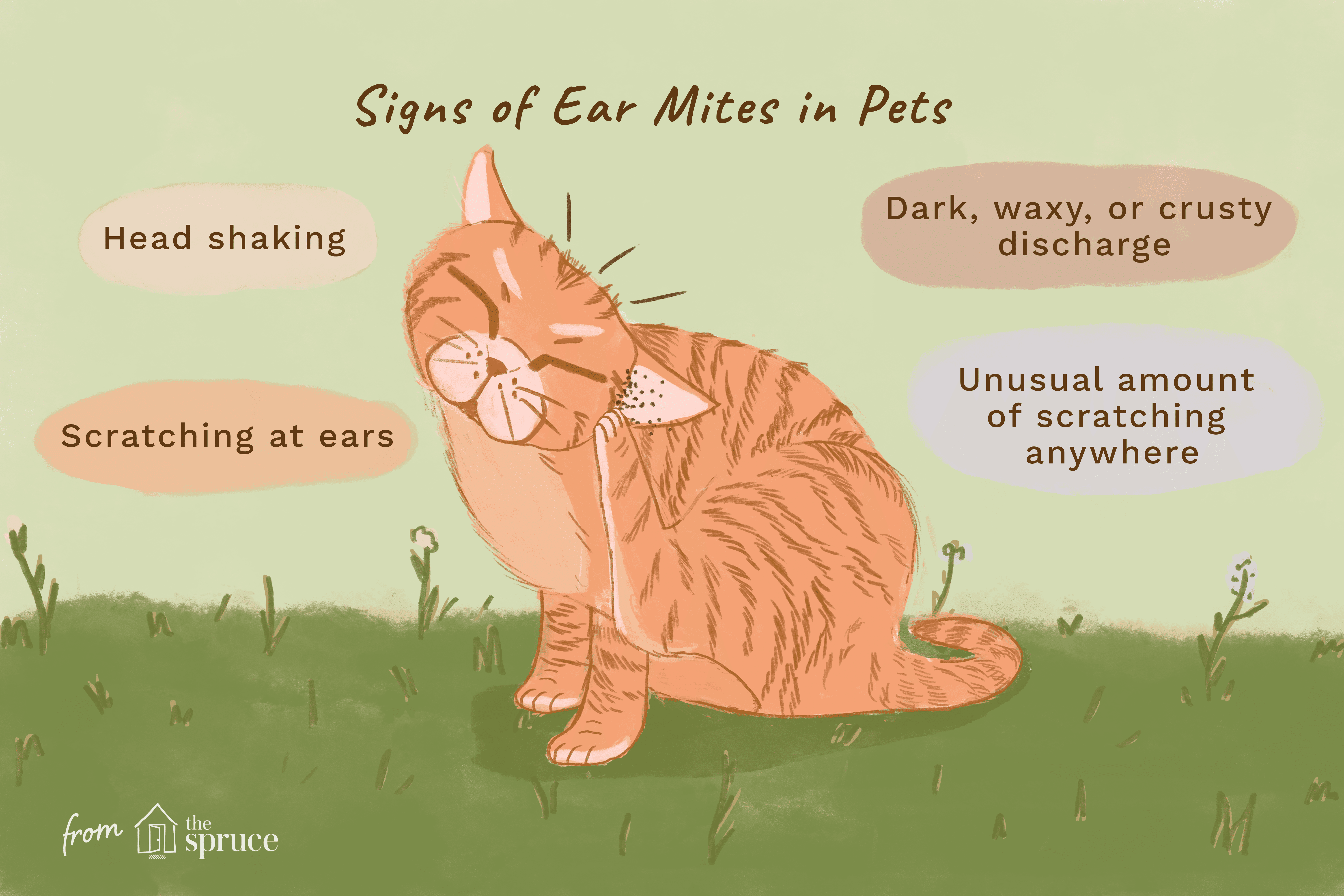 signs of ear mites in cats