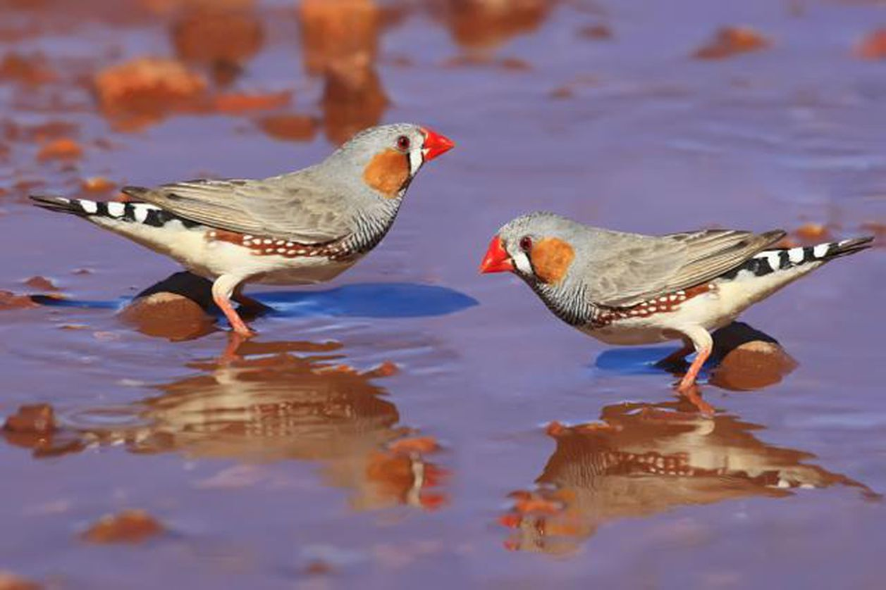Interesting Facts About Finches
