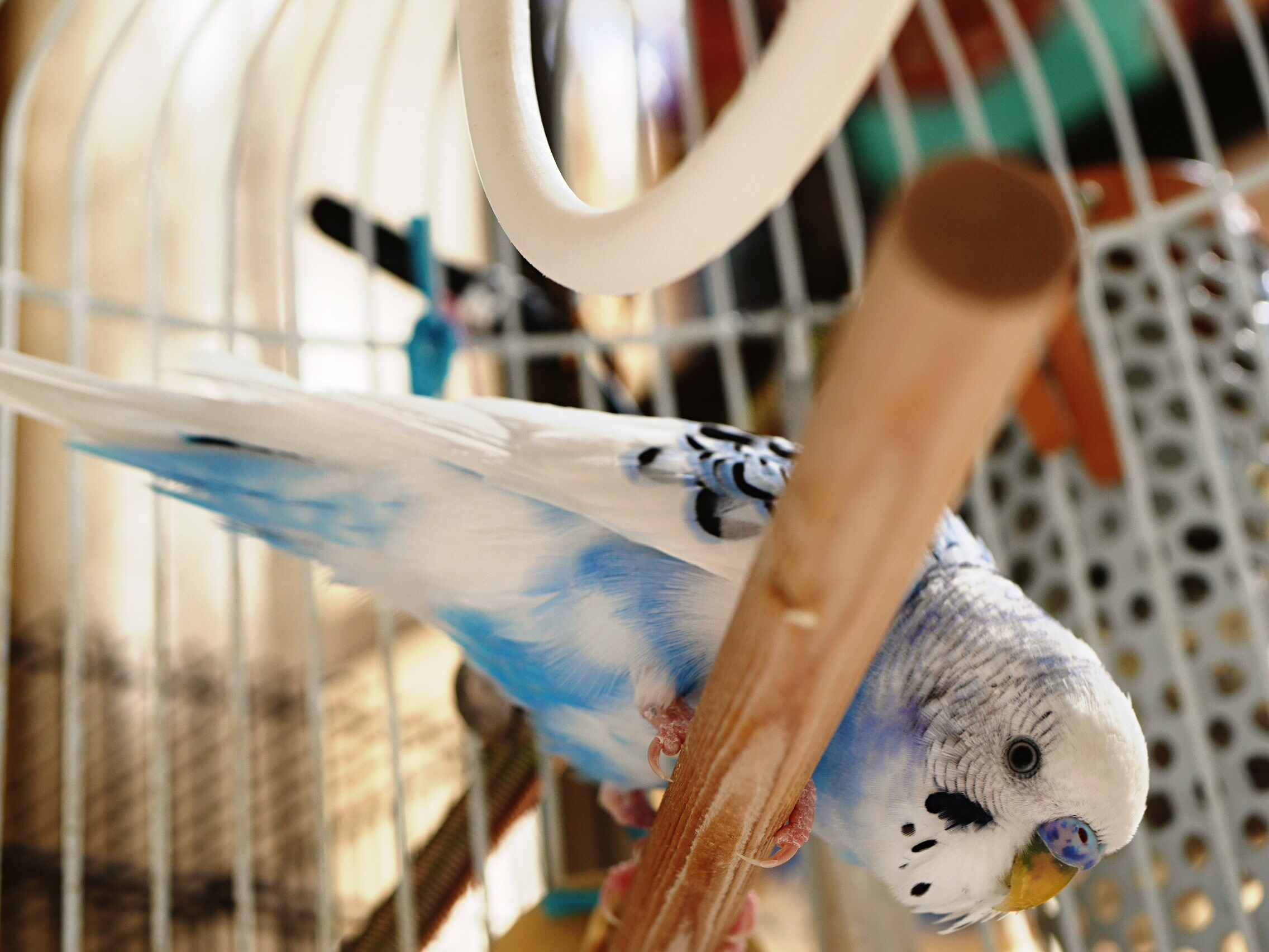 Close-Up Of Bird Perching On Wood In Cage