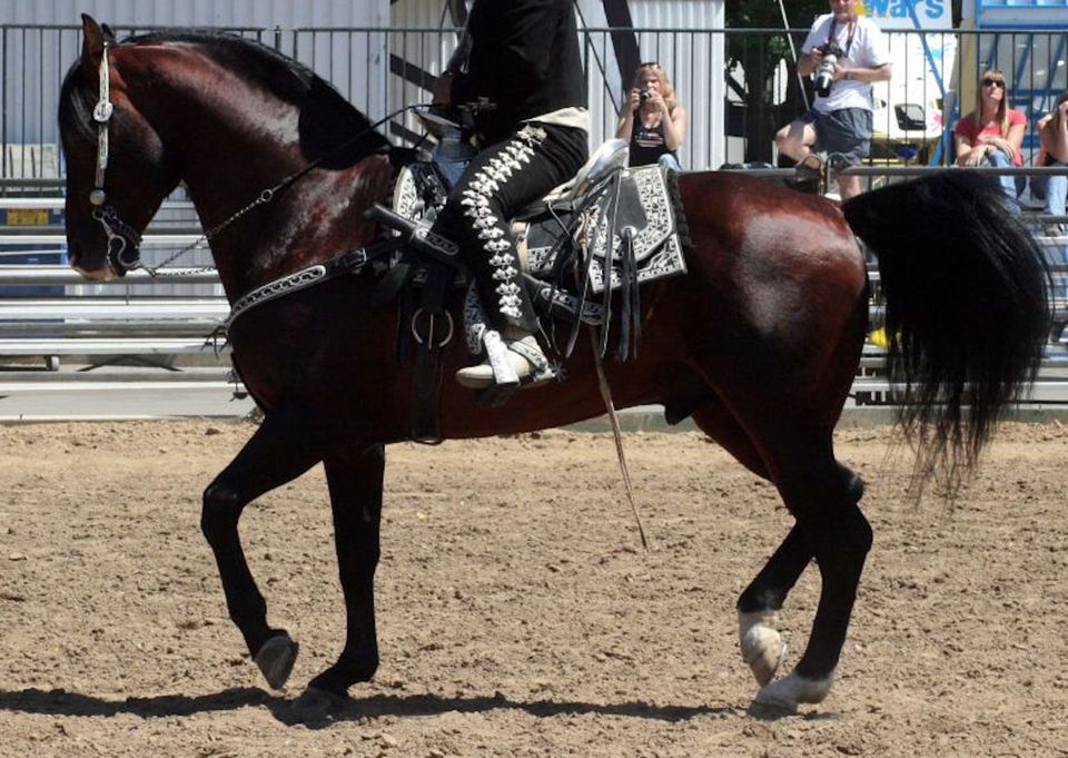 caballo azteca