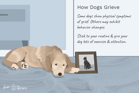 Dogs And Grief Over The Loss Of Another Pet
