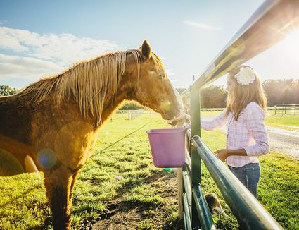 Horse eating with girl