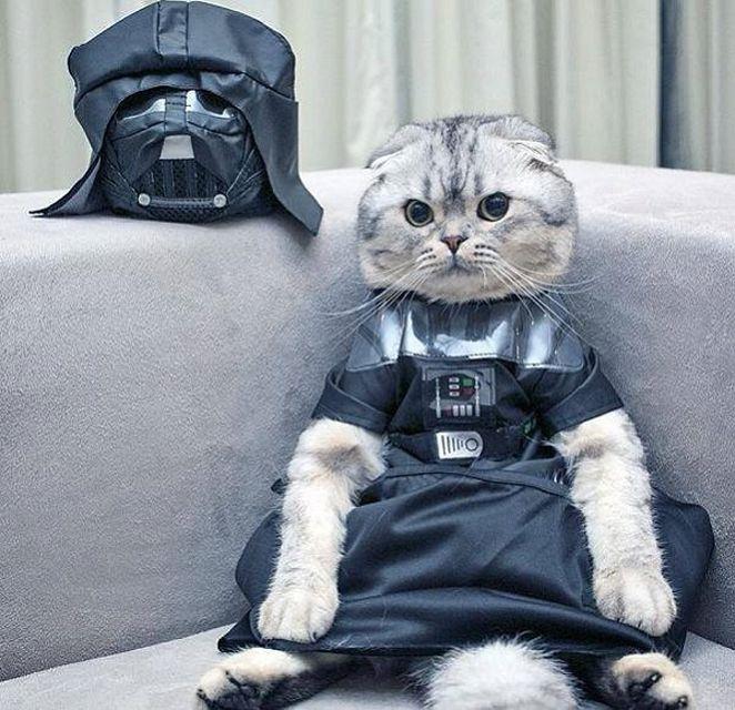 cat in Darth Vader costume