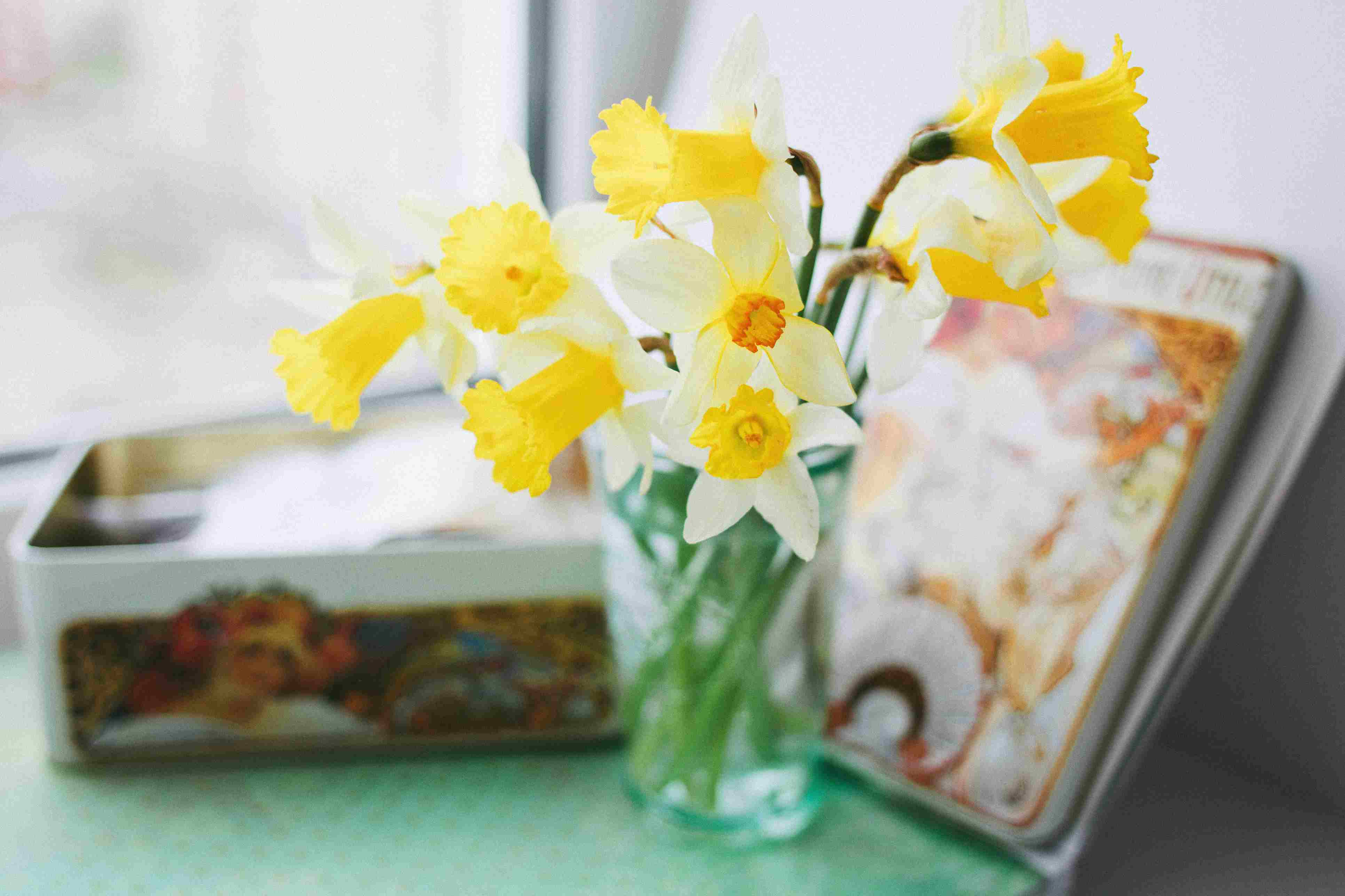 Yellow daffodils in a vase next to a tin