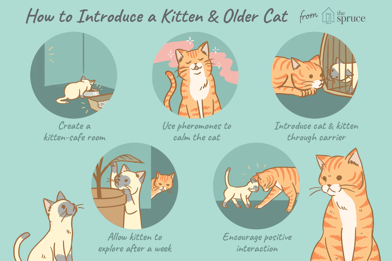How To Train Your Older Cat To Accept A Kitten