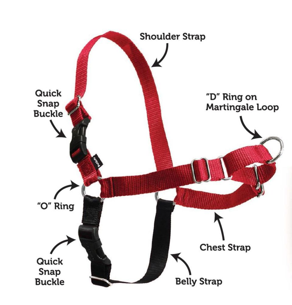 Premier Easy Walk Harness for dogs