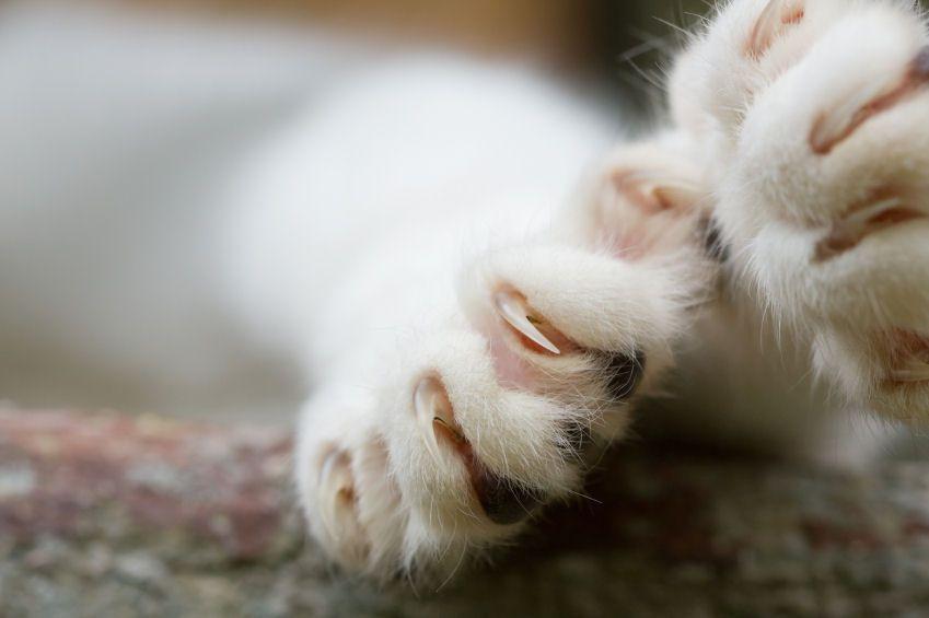 Primer plano de dos patas de gato