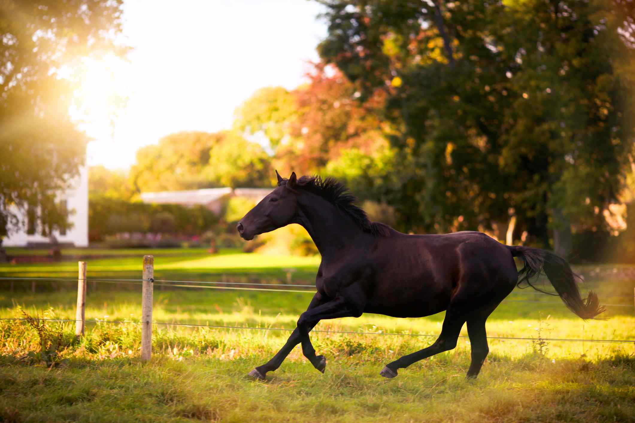 cool horse names - HD2121×1414