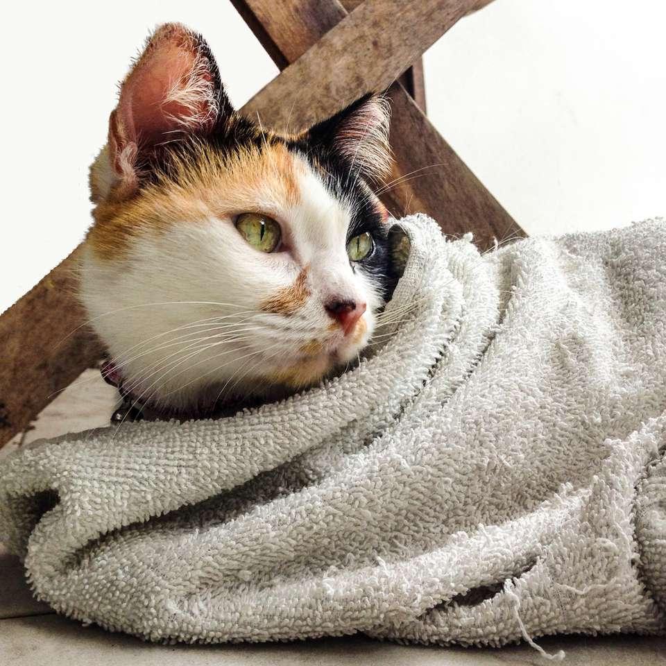 Gato envuelto en toalla