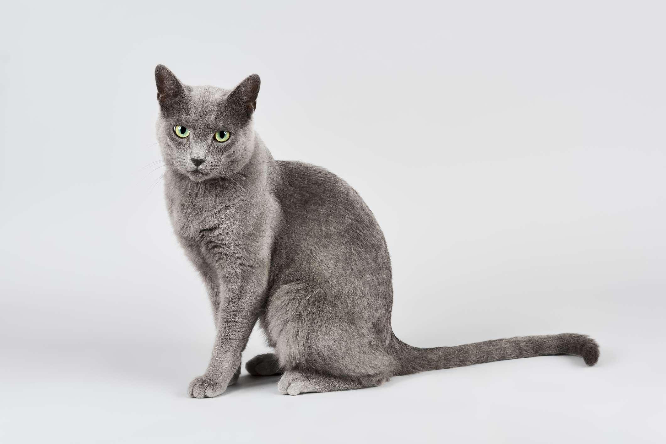 5 Russian Cat Breeds