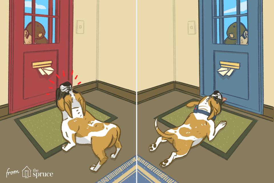 best dog collars illustration