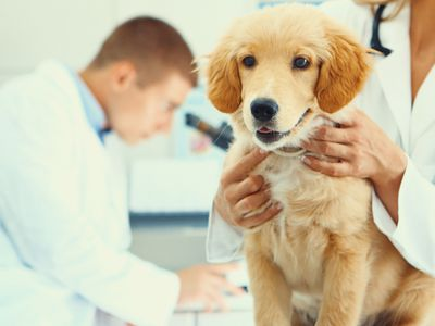 Veterinary Q&A: Lipomas (Fatty Tumors) in Dogs and Cats