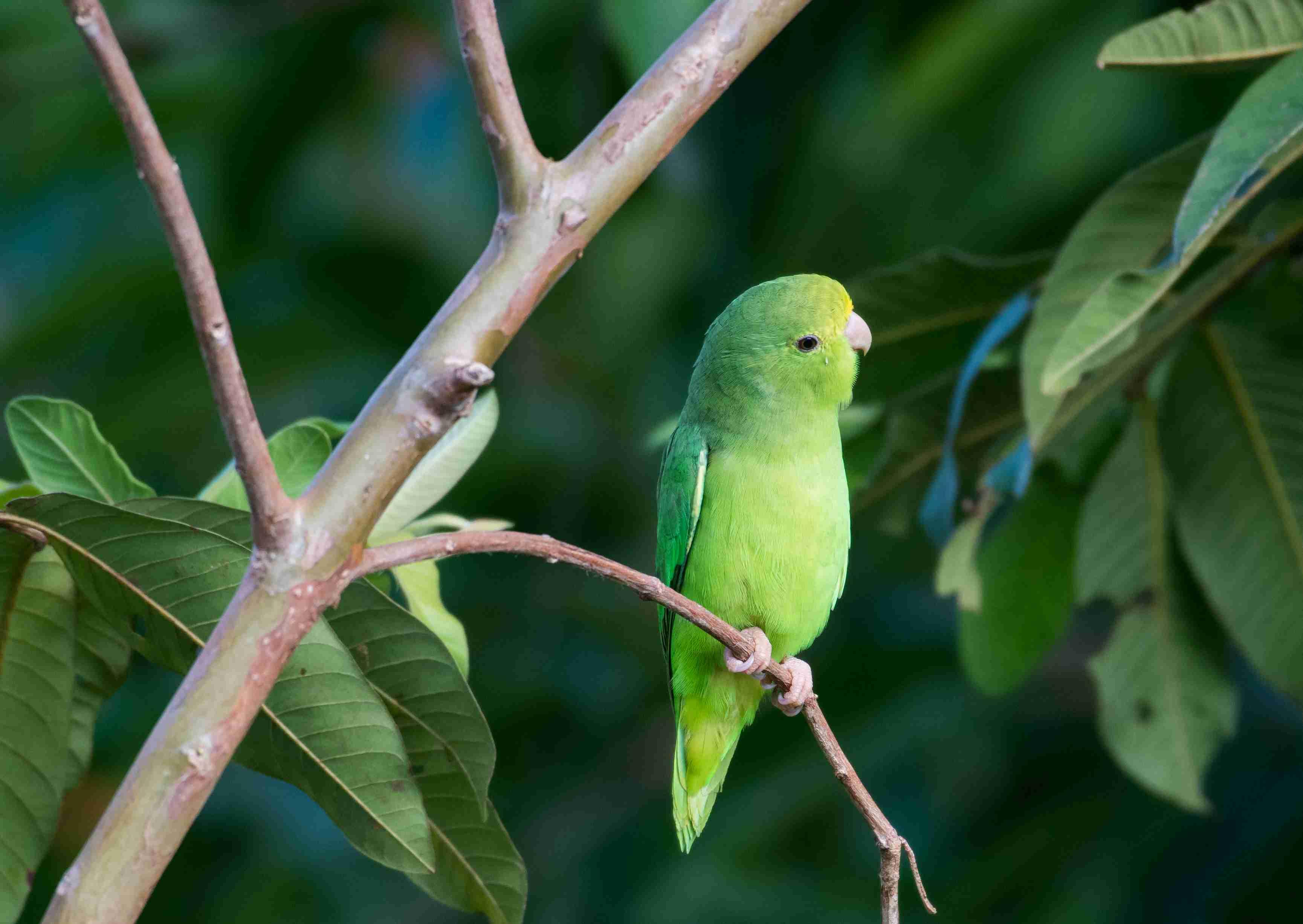 loro verde en una rama