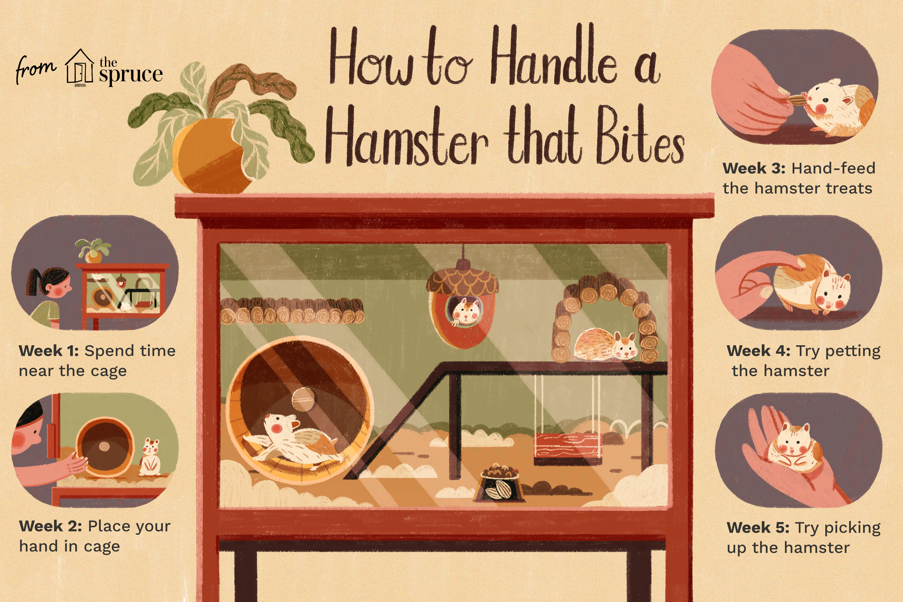 how to handle a hamster that bites illustration