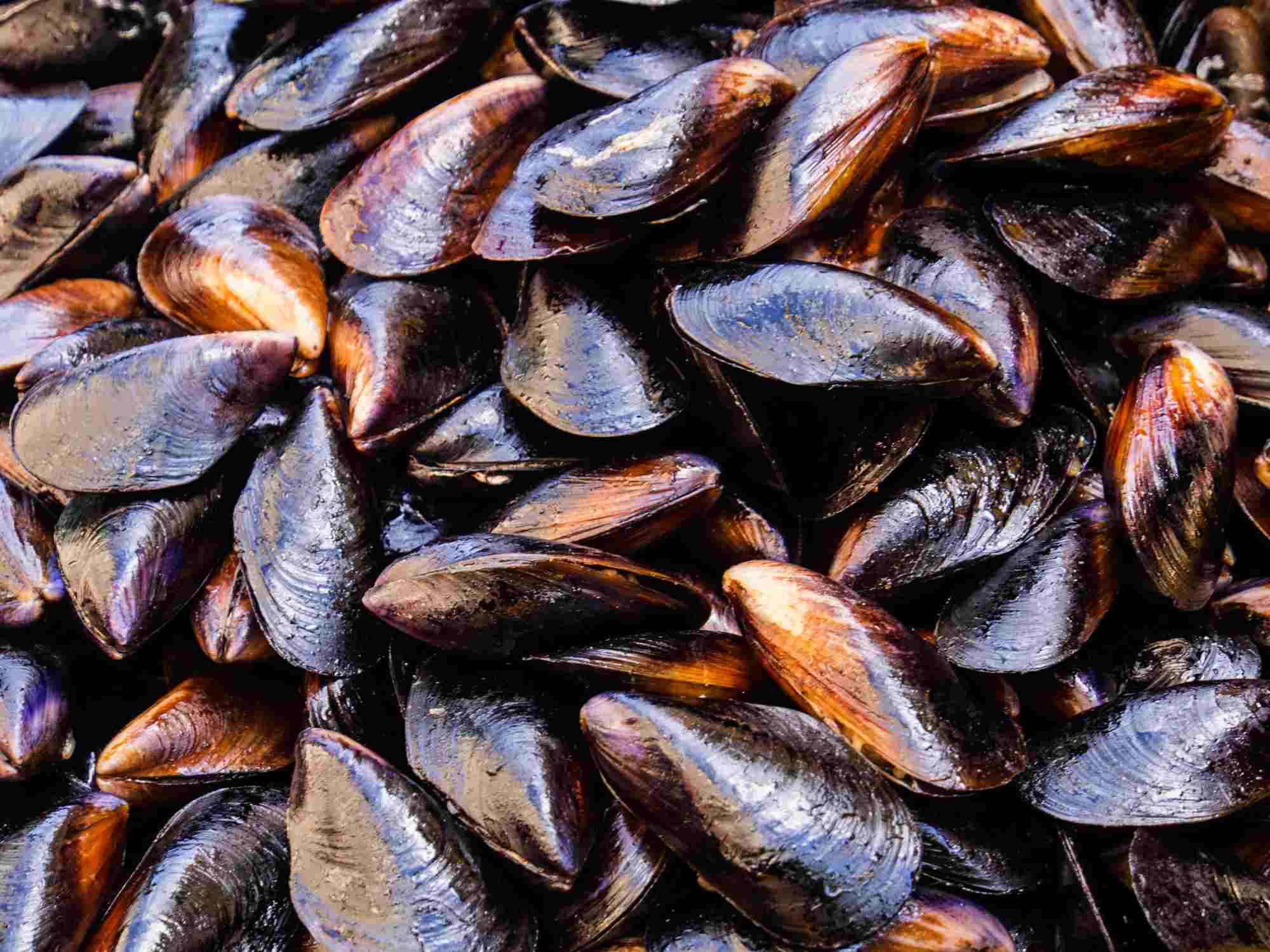 Full frame of fresh mussels