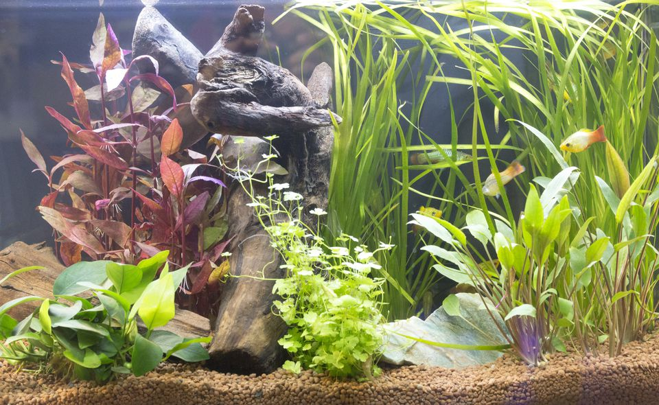 Beautiful freshwater planted aquarium