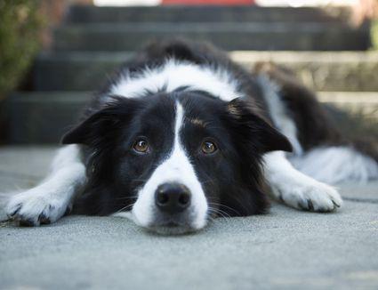 dog laying on pavement