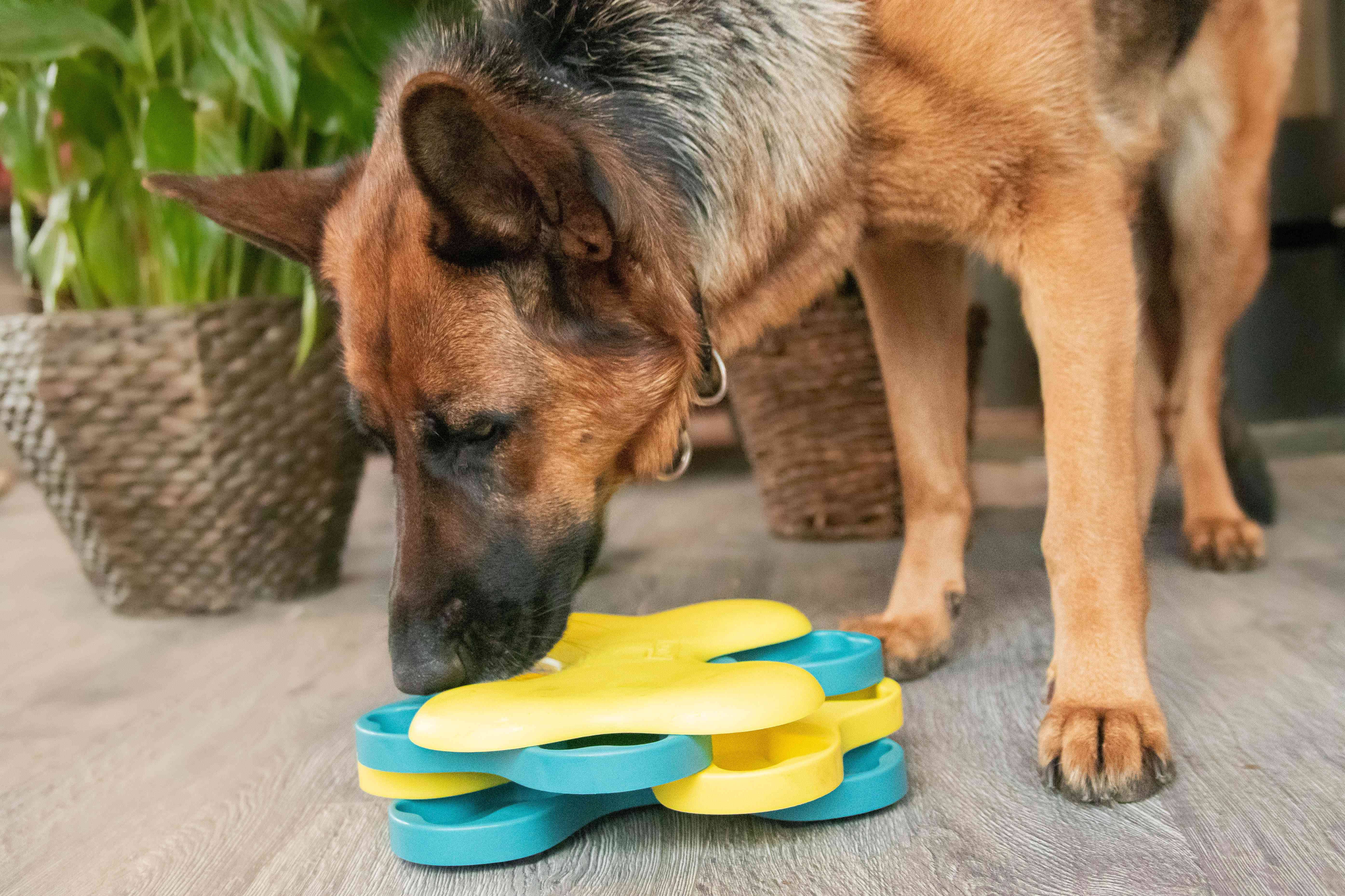 German shepard dog playing with pet puzzle toy