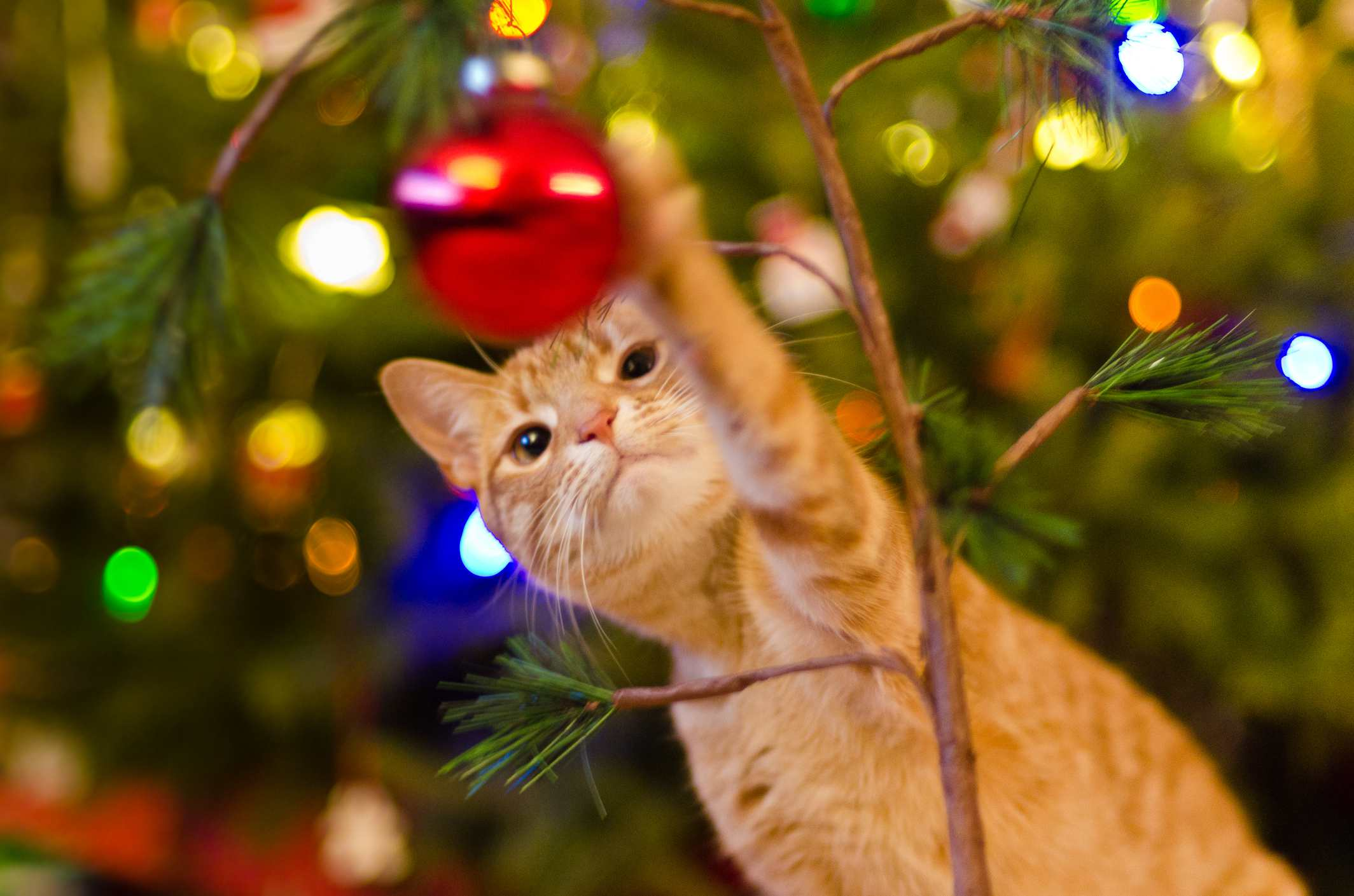 10 Holiday Safety Tips for Cats
