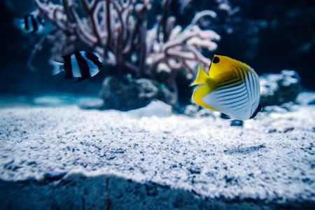 How to Use Live Sand in Your Saltwater Aquarium