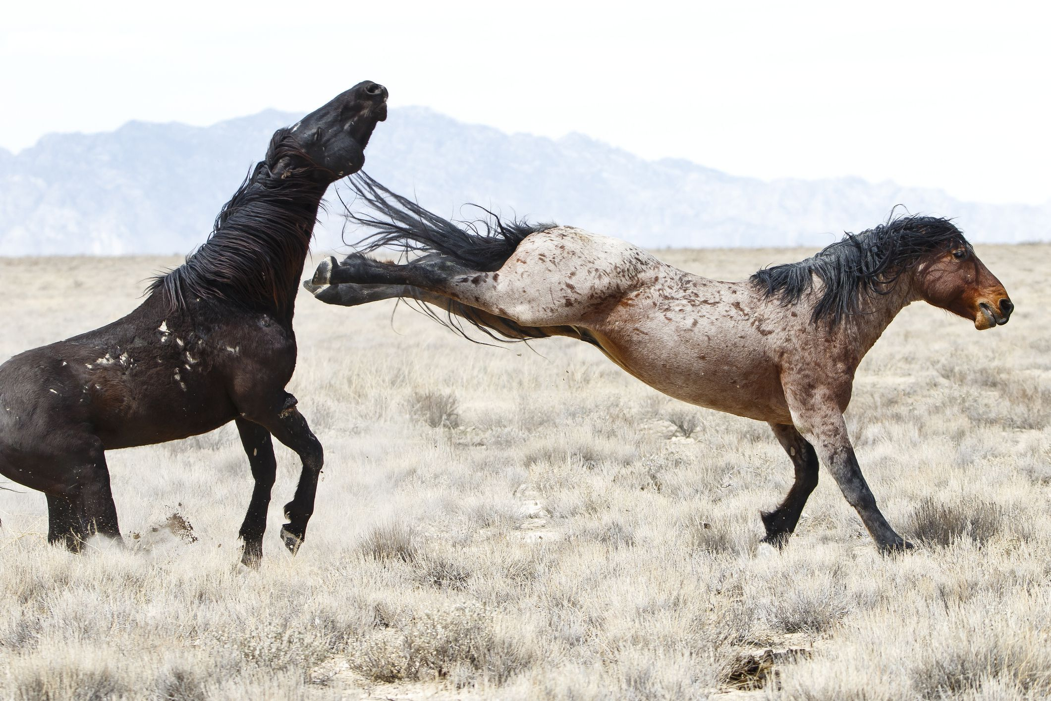 Why Horses Kick and What to Do About It