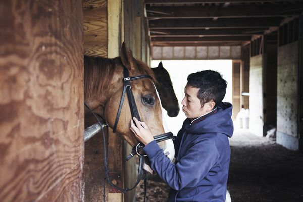 Man working in a horse stable