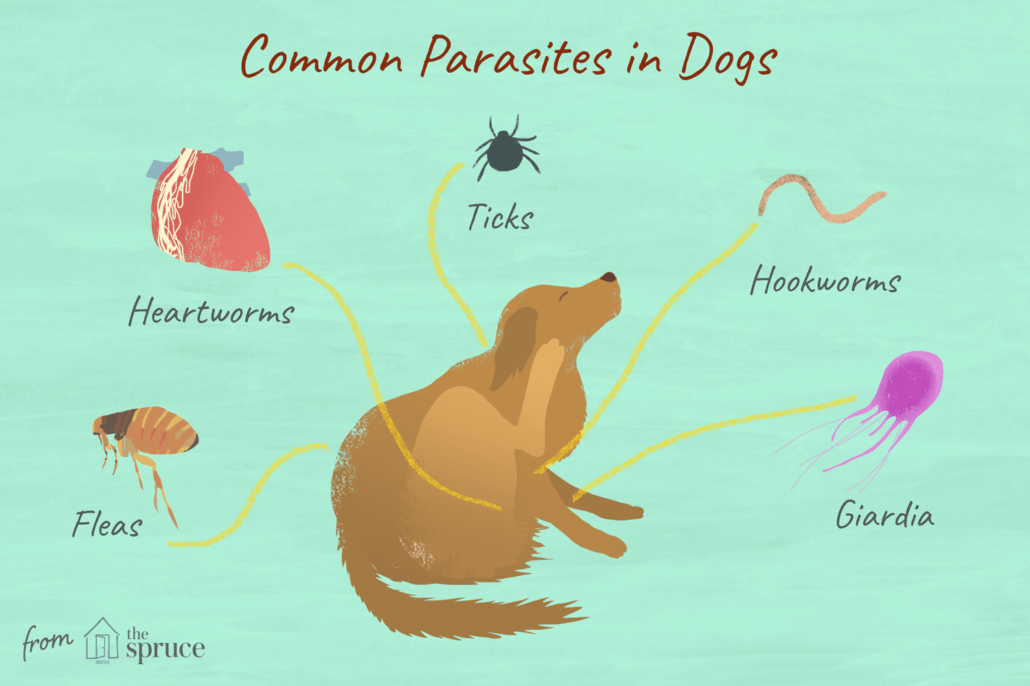 14 Worms Mites Ticks And Other Canine Parasites