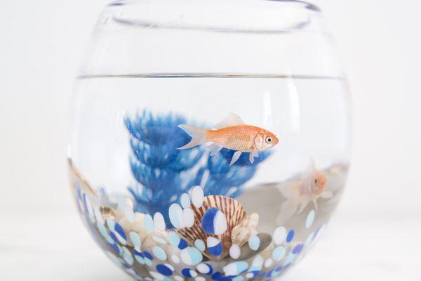 Orange fish swimming in glass fishbowl