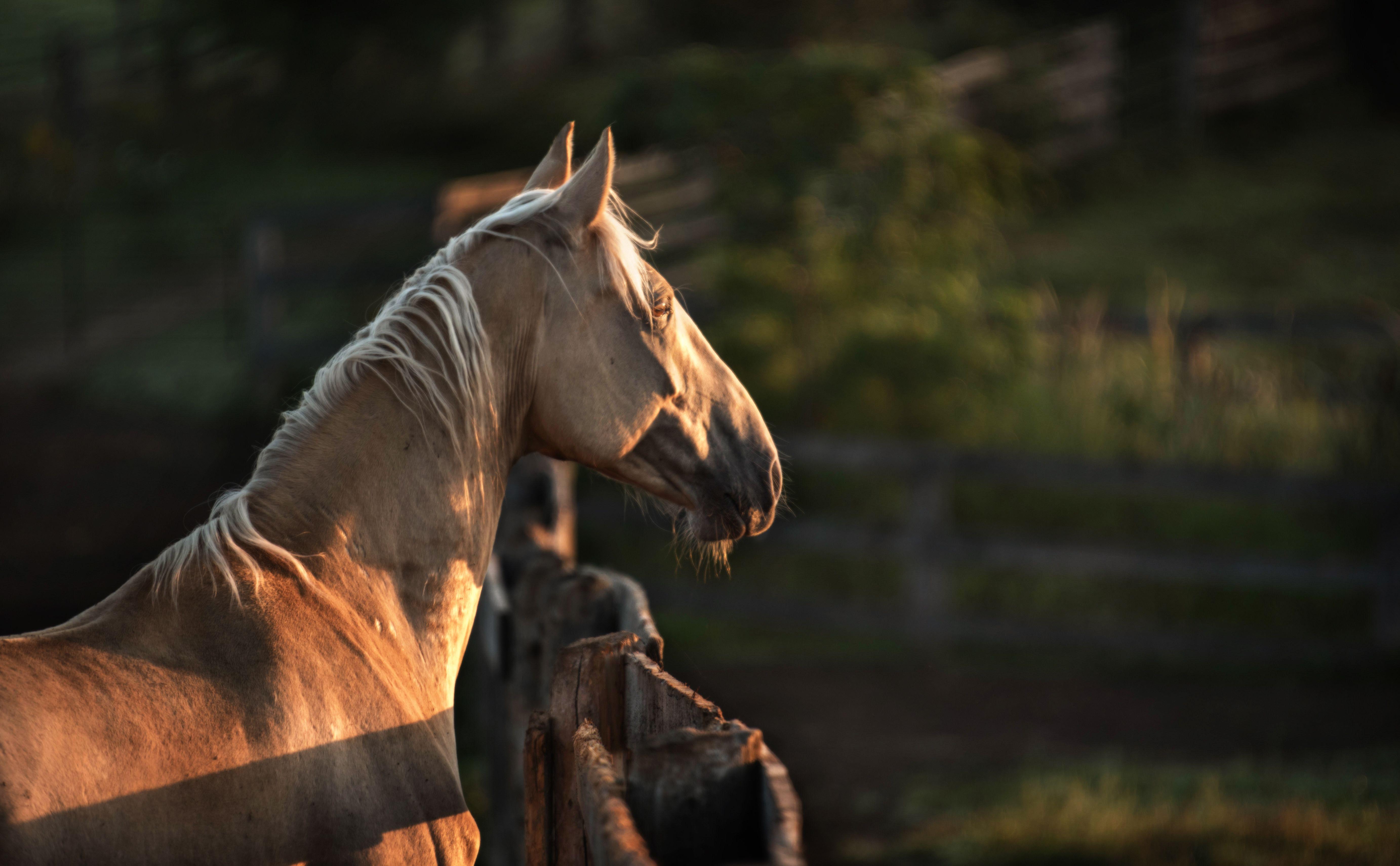 Un caballo a pie de Tennessee mirando a través de una valla