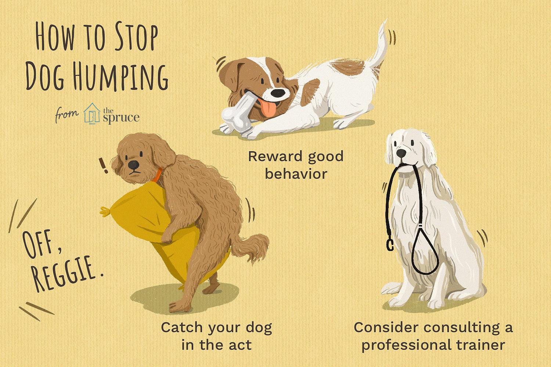 cómo detener la ilustración de joroba de perro