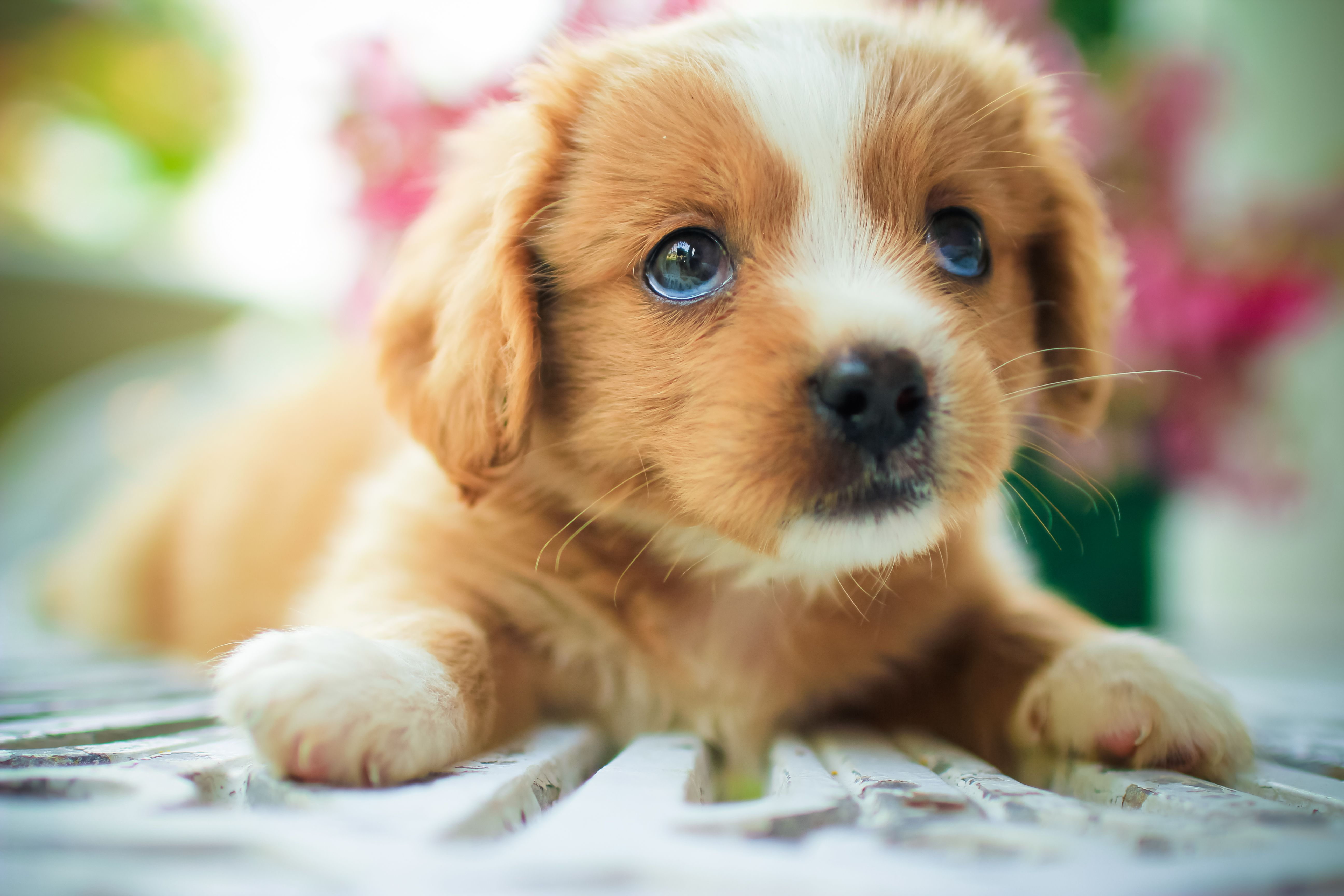 How Puppy Fur Hair Whiskers And Coat Grow