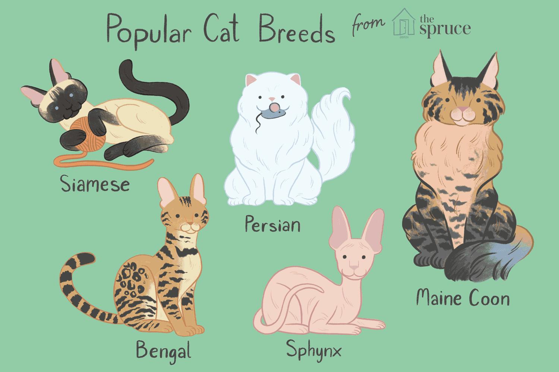 12 Most Popular Cat Breeds