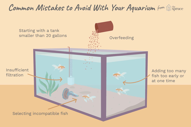 Ilustración de errores comunes para evitar con su acuario