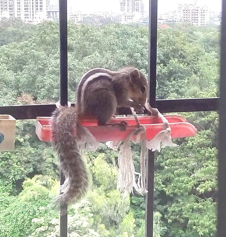 Squirrel snacking at the windowsill